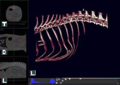 Canine Spine Study MPR