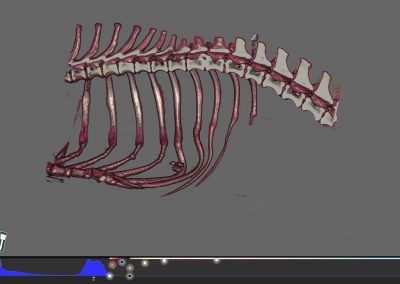 Spine Study Dachshound